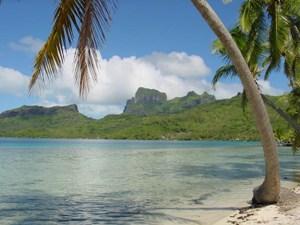 Beach with a palm tree